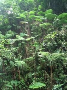 Philippinischer Regenwald