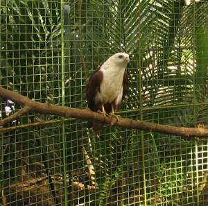 Mini-Zoo im MOAP