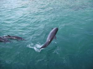 Delfine im Aquamarine Park