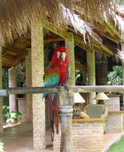 Der Papagei vom Coco Grove Beach Resort auf Siquijor, Negros Oriental