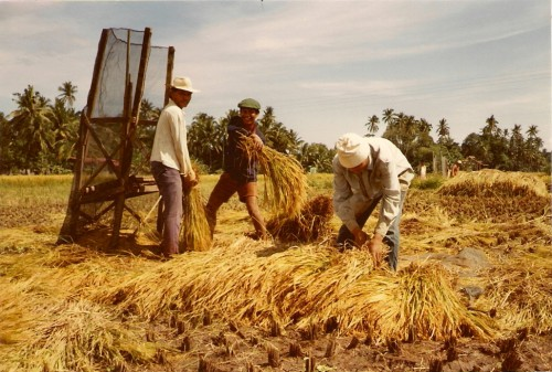 Reisanbau ist harte Arbeit