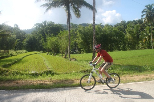 Vorbei an Reisfeldern