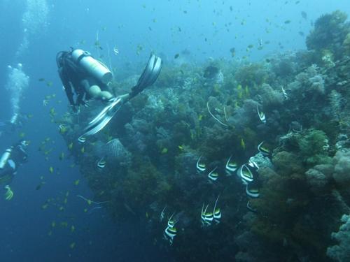 Tauchurlaub auf den Philippinen: Puerto Galera oder Boracay?