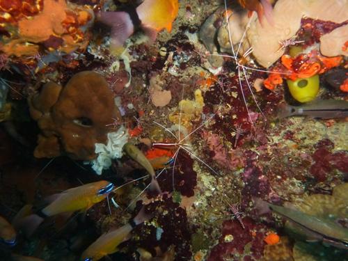 Philippinen unter Wasser