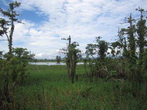 Agusan Marsh, Mindanao