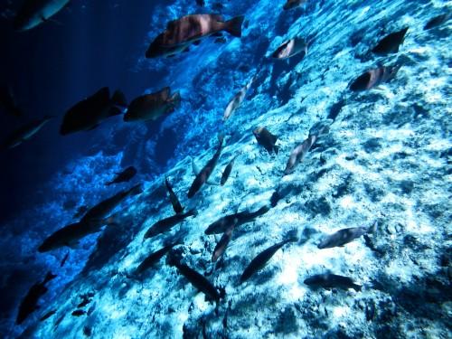 ...und noch mehr Fische. Foto: Bea.