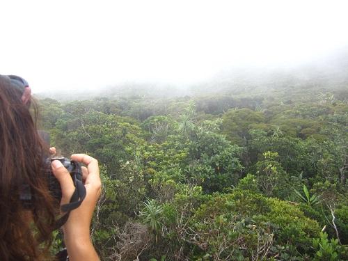 Bonsai Forest Dinagat