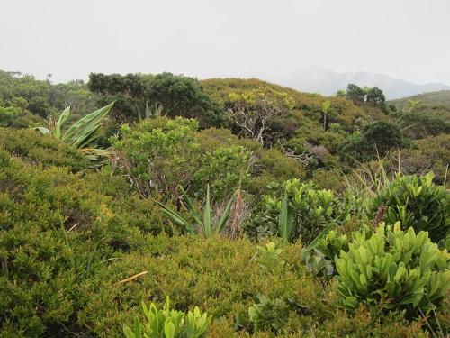 Bonsai Regenwald Dinagat
