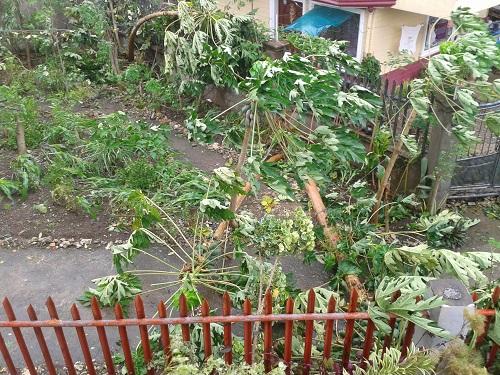"""Nach dem Taifun """"Haiyan"""" / """"Yolanda"""""""