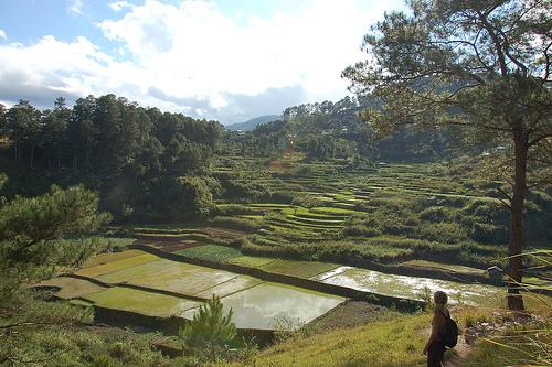 Reisterrassen in Sagada