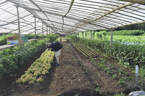 Perrine organic farm