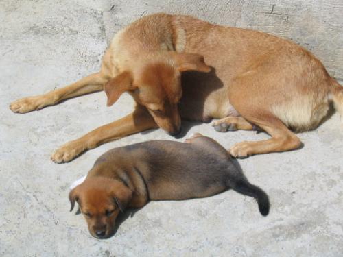 Hunde gehören zum Straßenbild auf den Philippinen