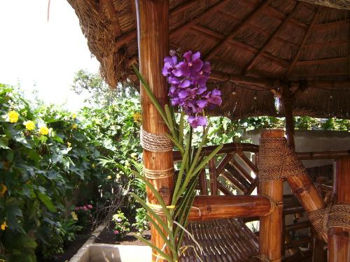 Das Rankengemüse Sikwa – schöne Pflanzendekoration und wohlschmeckendes Gemüse