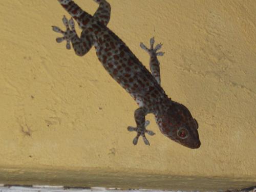 Der Lizard, von vielen verabscheut, für andere ein schützender Hausgeist