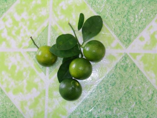 Calamansi - die kleinen, armoatischen Zitrusfrüchte