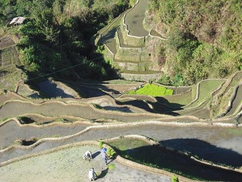 Die Arbeit auf den Reisterrassen ist durchaus mühevoll