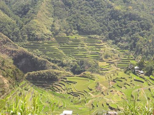 Reisterrassen von Banaue: Ein Geschenk an die Menschheit