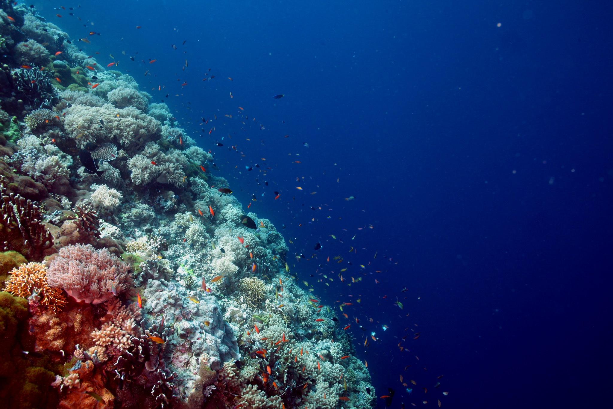 Jesse Beazley Reef, Sulu Sea, Philippinen