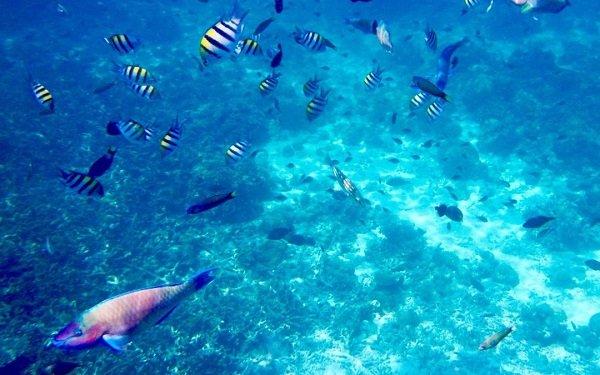 Tubbataha Riff – UNESCO-Weltnaturerbe