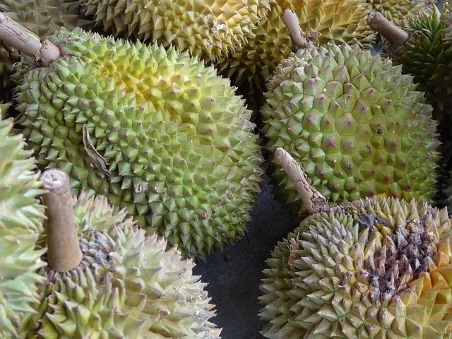Durian, die Stinkefrucht, in Davao