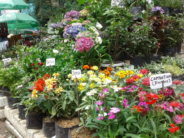 Blumenstand mit schönen Blumen am Mines View Park in Baguio City