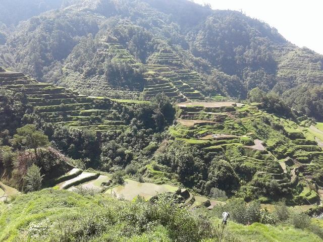 Reisterrassen vom NFA Augian View Deck aus gesehen