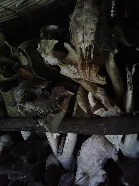 Tierschädel als Haus-Dekoration der Ifugao in Banaue