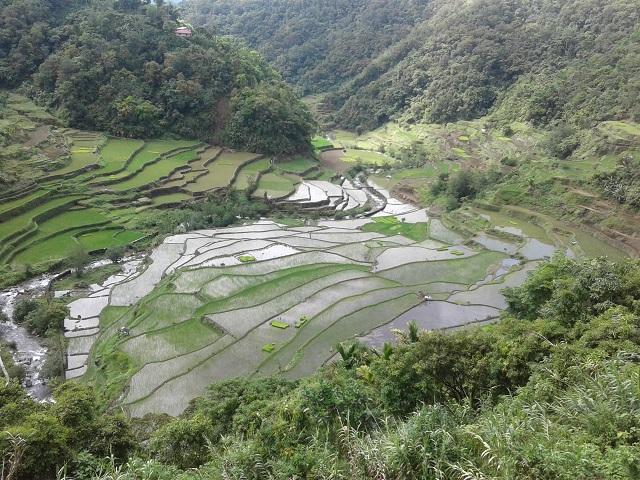 Unter Wasser stehende Reisterrassen in Banaue in den Philippinischen Kordilleren